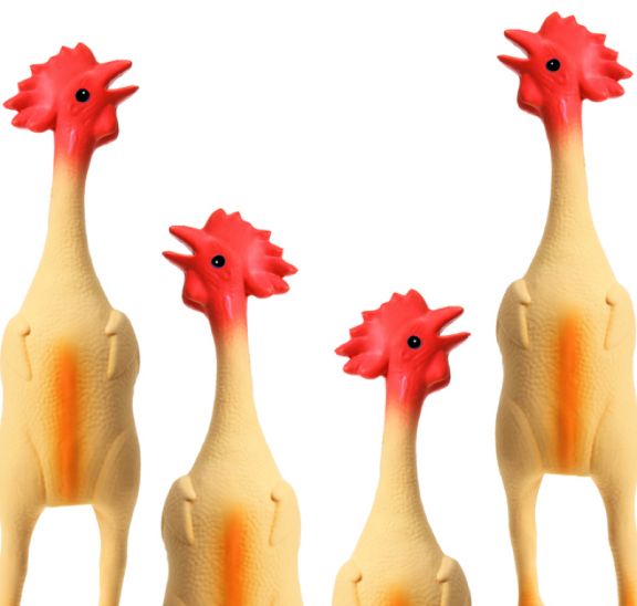 Rubber chickens preparing for Pachelbel's Canon