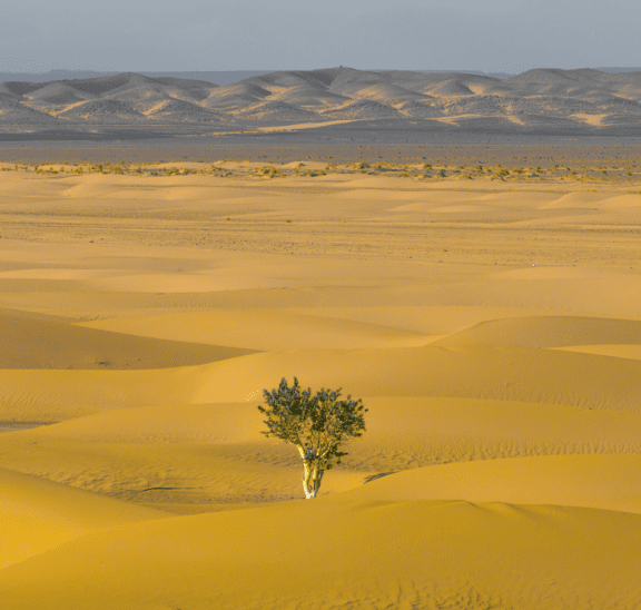 Tree in a desert showing ways to build resilience