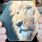 Mark holding lion photograph to inspire story-telling game