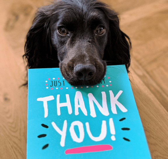 Dog with Thank You card knowing how to give positive feedback